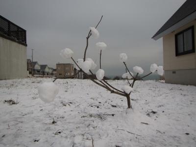 まる作雪たまの木