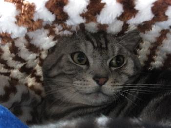 猫袋の温かさがわかりました3