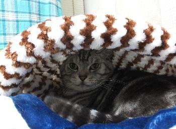 猫袋の温かさがわかりました2