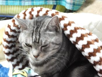 猫袋の温かさがわかりました1