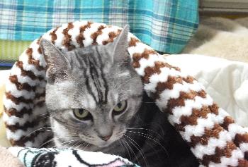 猫袋の温かさがわかりました