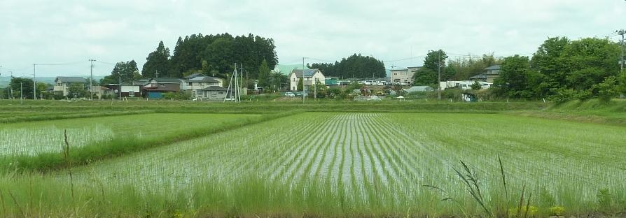 実沢の水田160531