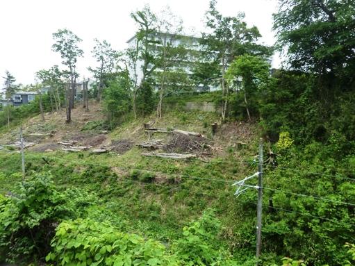 国見1丁目崖地の樹木伐採