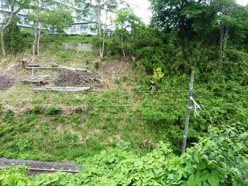 国見1丁目崖地の樹木伐採b