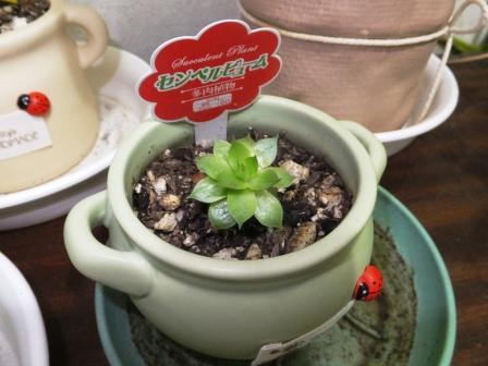 観葉植物3