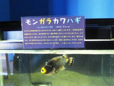 水族館6JPG