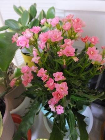 ボヌールの花1