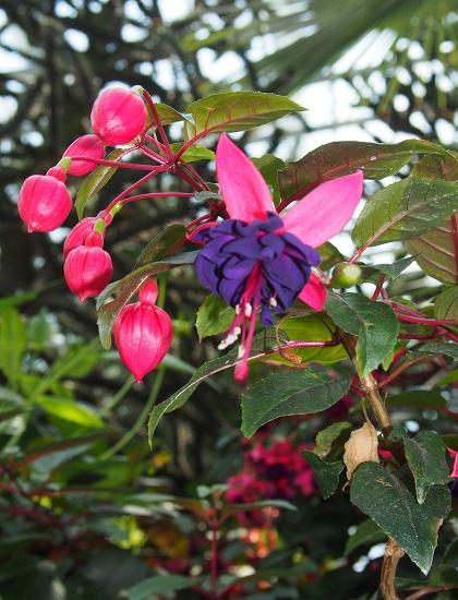 gardenby2.jpg
