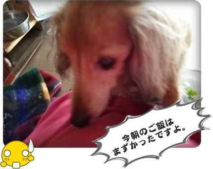 おんぷ花1DSC_3486
