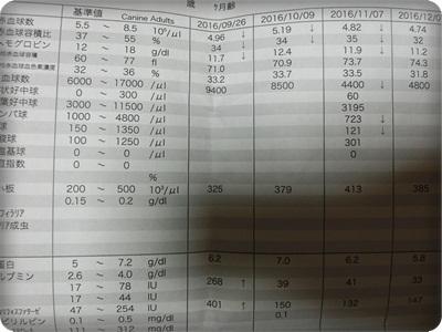 シュシュやんa004