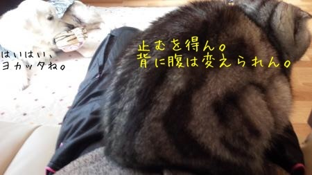 20161219185049c2b.jpg