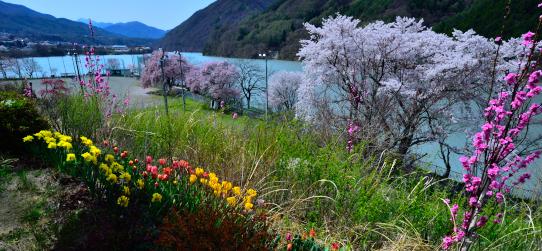 展望休憩ルームから望む春景色