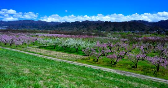 千曲川沿線の盛春