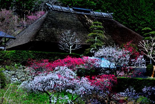 花桃咲く駒ヶ根市中澤地区・旧木下家