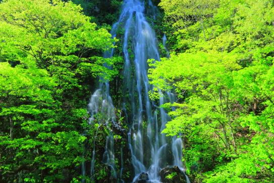 若葉の中を落ちる樽滝