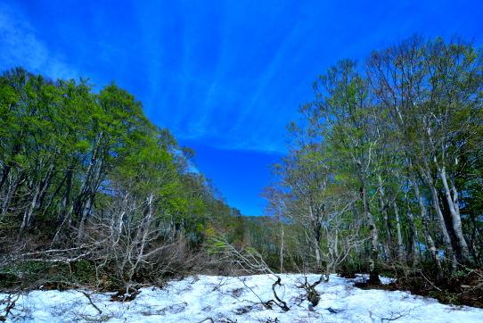 雲と若葉の映えるブナ林