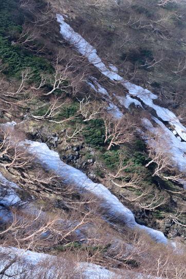 ダケカンバと残雪の山肌