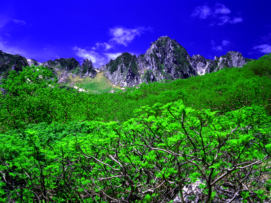 宝剣岳とナナカマド萌える