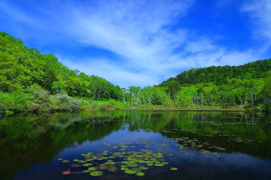 一沼に映える若葉の森