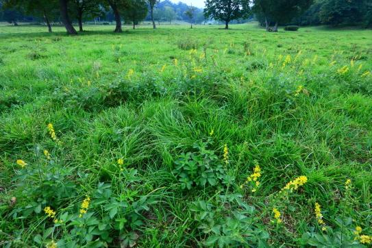 夏の名残の草原