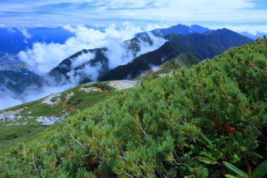 主稜のハイマツ帯から主脈と空木岳を望む