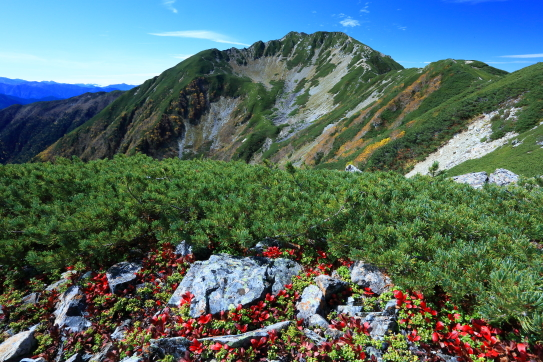 紅葉彩る仙丈ヶ岳