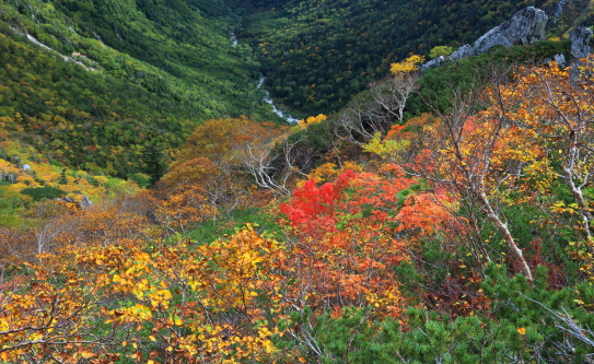 木曽駒ヶ岳馬ノ背を彩る紅葉