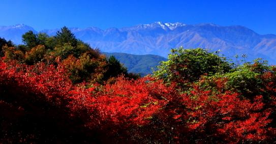 初雪の中央アルプスを彩る紅葉