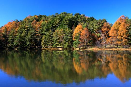 錦秋の千代田湖