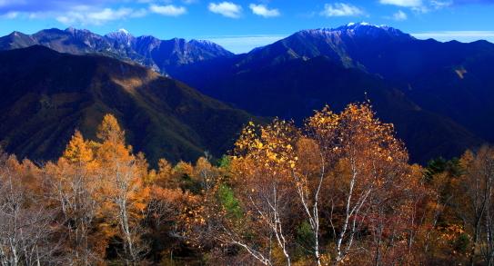初冠雪の東駒と仙丈ヶ岳を彩る黄葉
