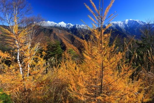 白銀の仙丈・東駒ヶ岳を彩るカラマツの黄葉