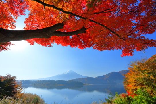 モミジの紅葉と霊峰富士