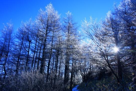 霧氷に覆われた飯盛山の登山道