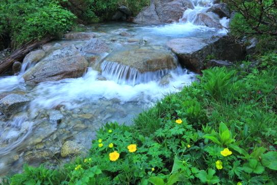 05-梅雨の中、そっと沢筋を彩るお花畑