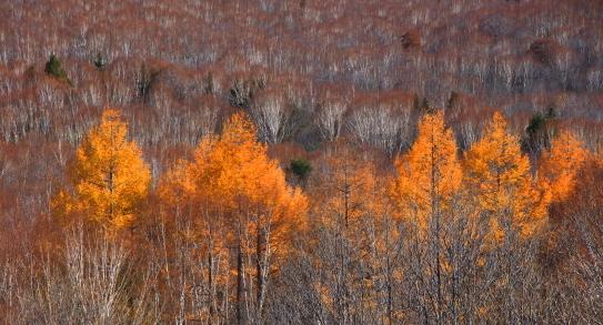 17-冬将軍を待つ奥志賀高原の森