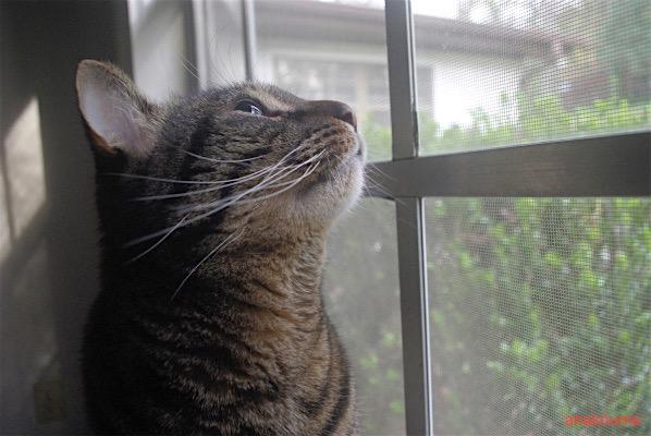 猫ちゃ〜〜ん4