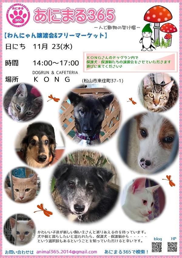 kong11 blog