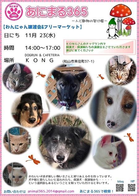 kong11 blog1