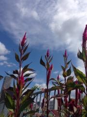花を育てて夏空