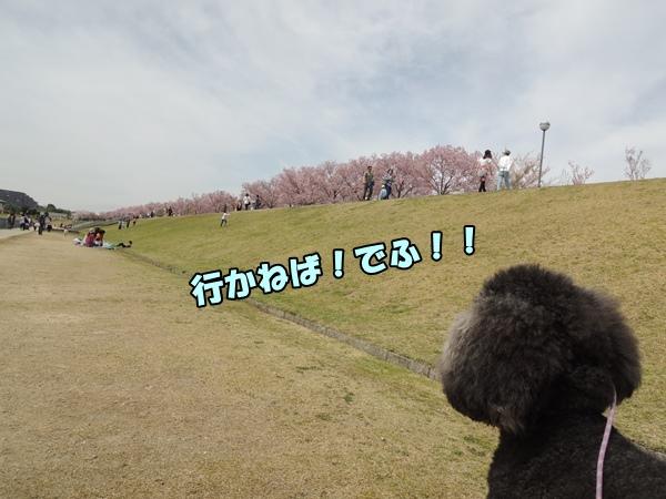 DSCN445920160412a.jpg