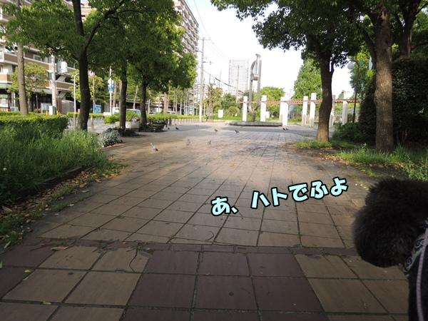 DSCN498020160426.jpg