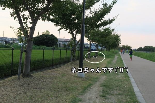 IMG_157720160912.jpg