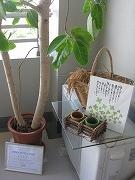 s-ベランダで美活野菜保存