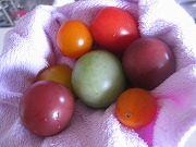 s-紫トマト