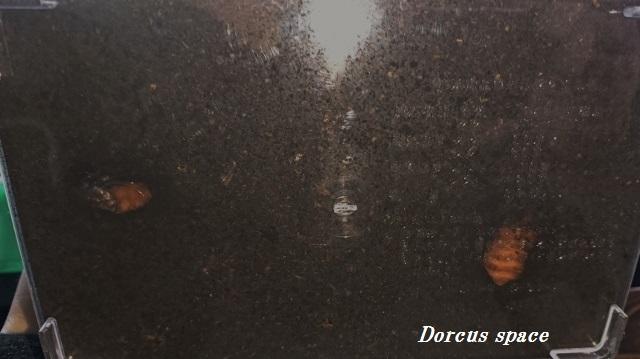 DSC_0087 (640x359)