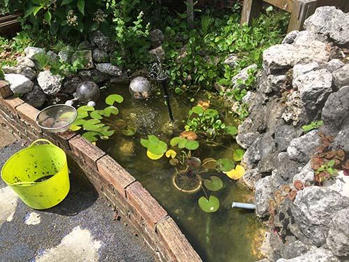 ビオトープ池