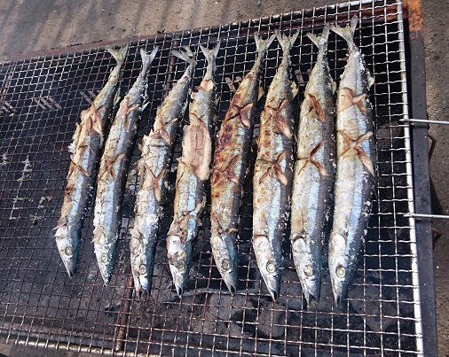 161002秋刀魚