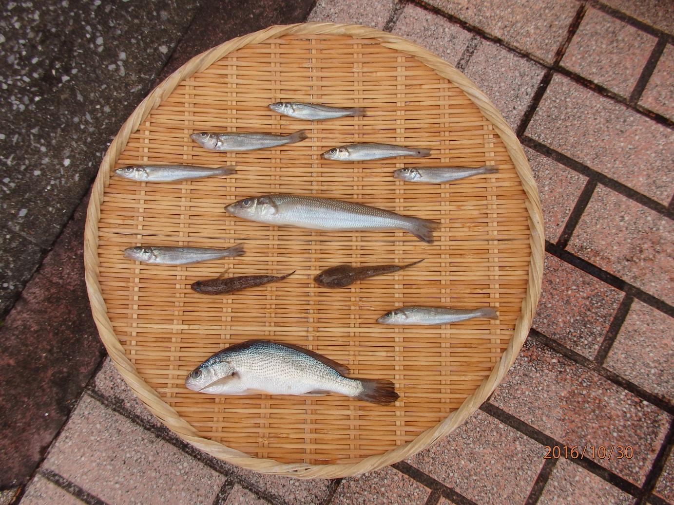 20161029釣果投げ釣り