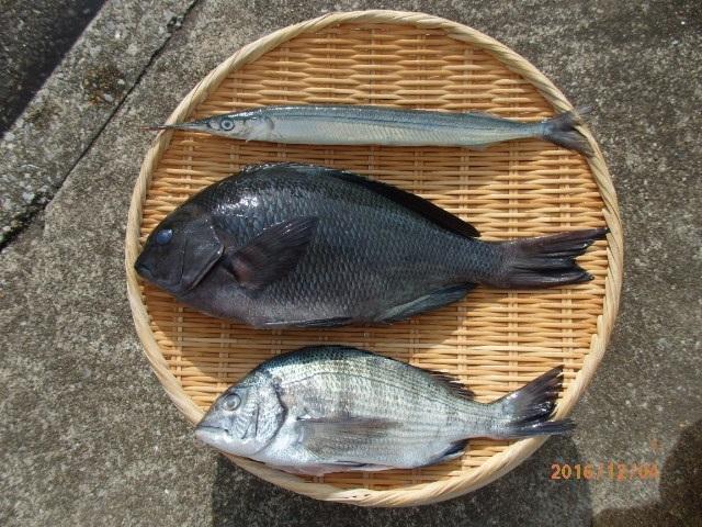 20161203和田漁港釣果1