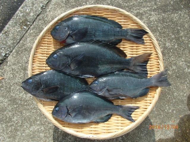 20161203和田漁港釣果2